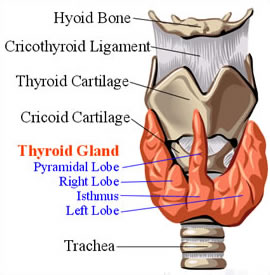 Symptoms Thyroid Cancer Information Hyperthyroidism Symptoms