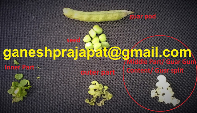 Guar seed and Guar gum parts, Guar pod, Guar Seed, Guar Korma, guar Split and Guar hull.