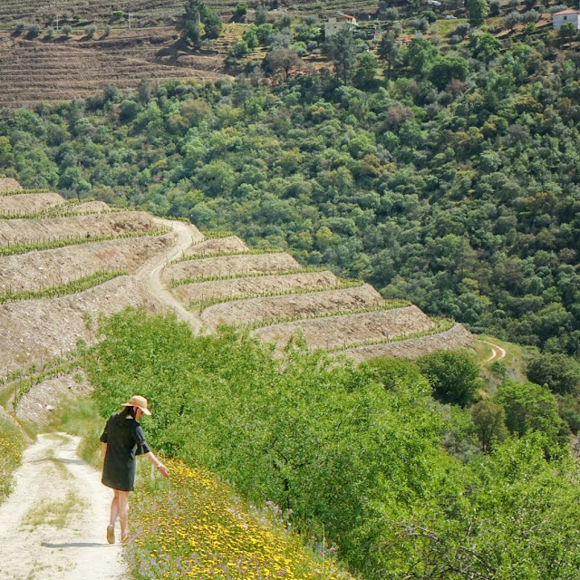 Douro Valley Vineyard, Photo Credit: Jeff Viscomi