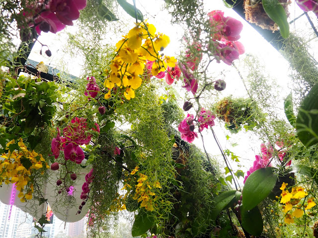 Flowers hanging from archway roof at Hong Kong Flower Festival 2017