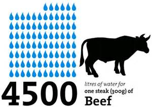 beef water use