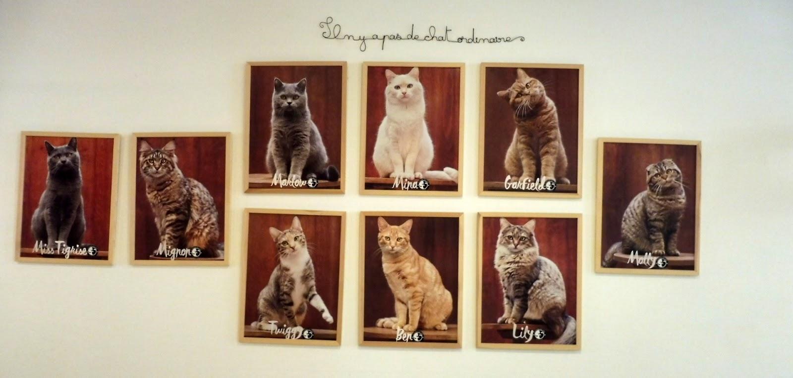 Le comptoir des chats - Bordeaux - Par Lili LaRochelle à Bordeaux