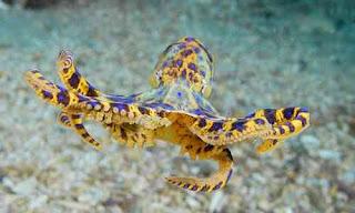 gurita berbisa dan beracun sedunia