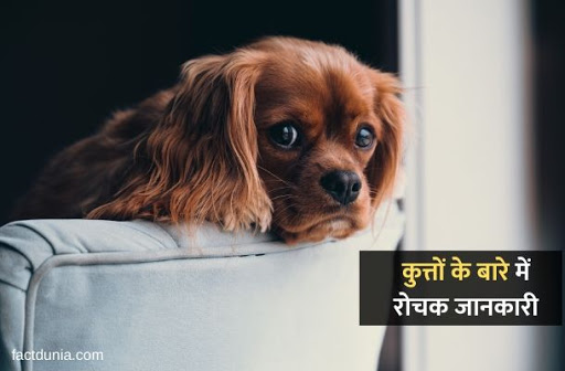 information of dog in hindi