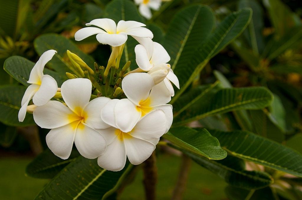 beautiful flowers pics