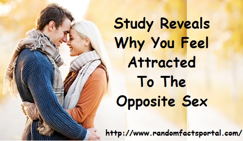 Study Reveals Why You Feel Attracted To The Opposite Sex