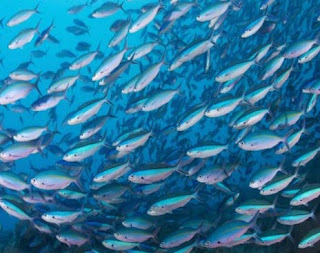 18 Arti Mimpi Ikan Menurut Primbon Jawa Terlengkap