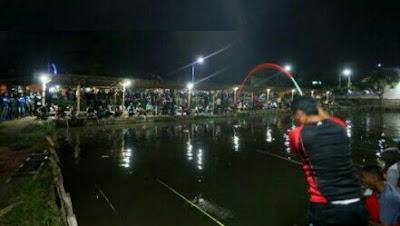umpan ikan patin kolam malam hari