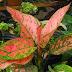 Jenis Tanaman Hias Bunga untuk Menghiasi Taman Minimalis