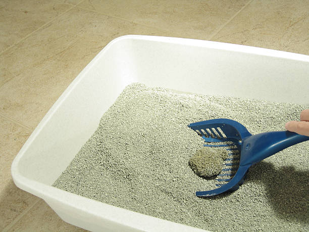 Cat Litter Boxes – They Don't Have To Be Evil