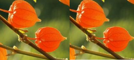 Ashwagandha- A blessing for your youthful appearance
