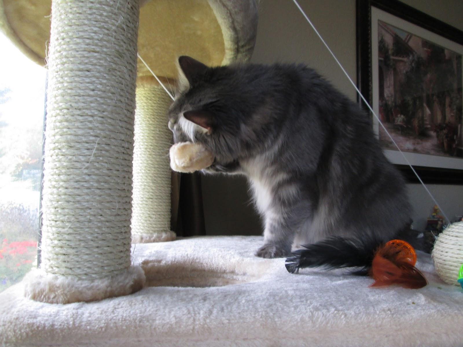 Happy Clean Living Cat Lady Alert