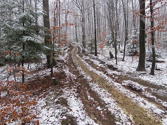 Leśna droga do Roztok Górnych.