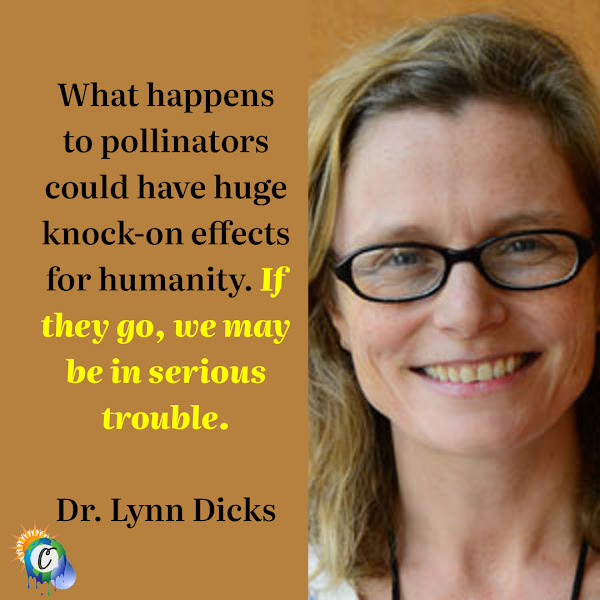 What happens to pollinators could have huge knock-on effects for humanity. If they go, we may be in serious trouble. — Dr. Lynn Dicks from Cambridge's Department of Zoology