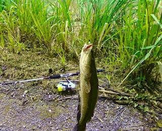 Memancing yaitu salah satu aktifitas yang paling menyenangkan bagi beberapa orang yang ho Nah ! Cara Memancing Ikan Keli Paling Benar Dan Paling Jitu