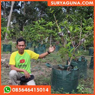 Planter Bag Murah dan Berkualitas