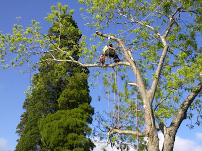 Tree-Lopping-West-Sydney