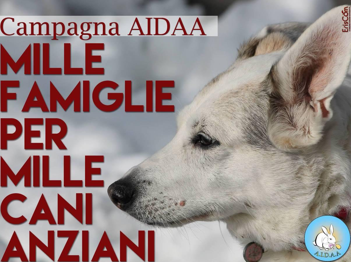 Associazione Italiana Difesa Animali Ed Ambiente Novembre 2017