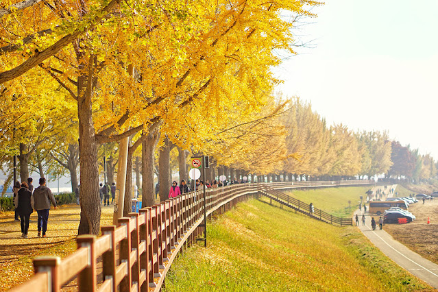 Đi tìm 6 nơi chụp ảnh mùa thu đẹp nhất Hàn Quốc