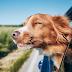 Κορωνοϊός: Καταφύγιο φέρνει τους σκύλους στο σπίτι
