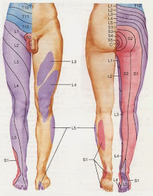 dolor perineal iii