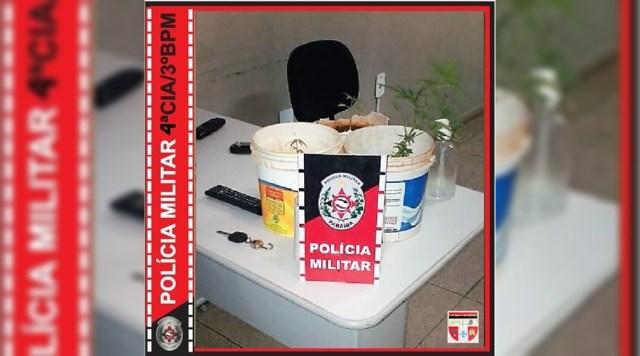 Polícia Militar localiza plantio de maconha no Sertão