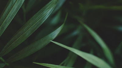 HD wallpaper sheets, plant, macro