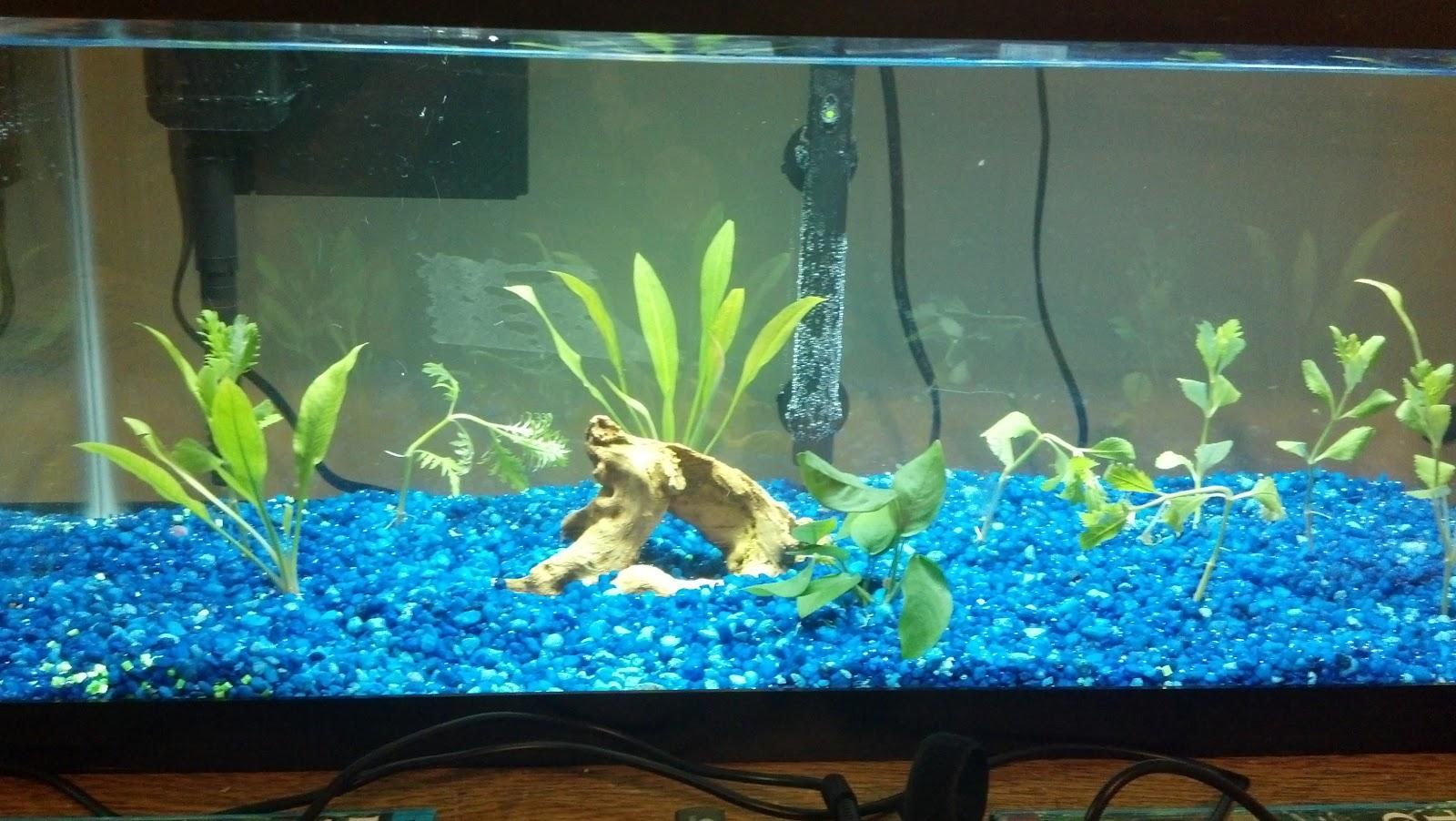 20 gallon aquarium craigslist 106 kb jpeg fish tank for for Freshwater fish for 20 gallon tank