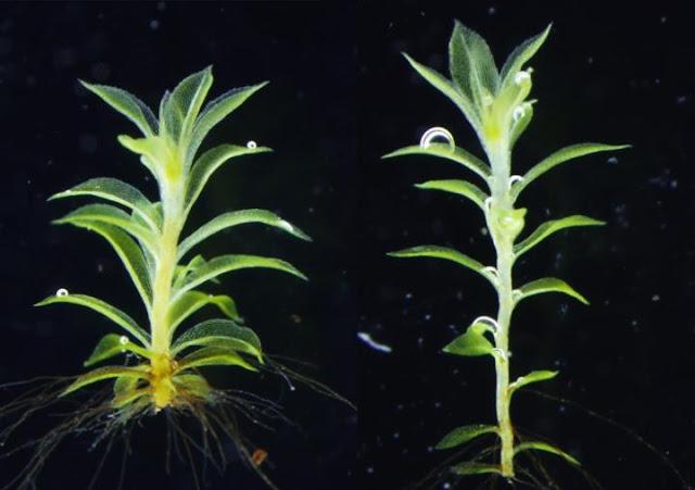 The origin of flower making genes