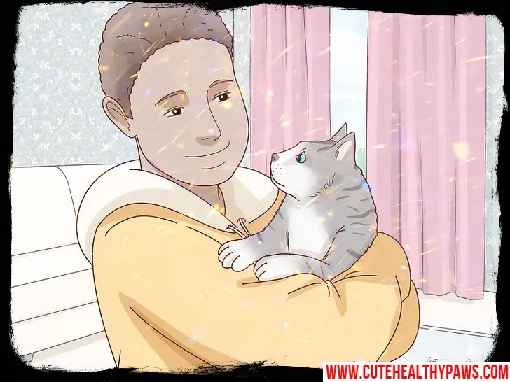 How to determine if your cat is suffering from depression