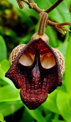 Hiii 5 Bunga ini Bentuknya Sangat Seram
