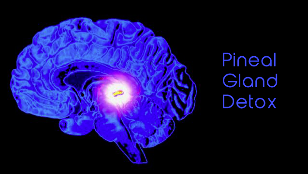 Top 5 Foods for the Wonder Organ Pineal Gland (Third Eye)