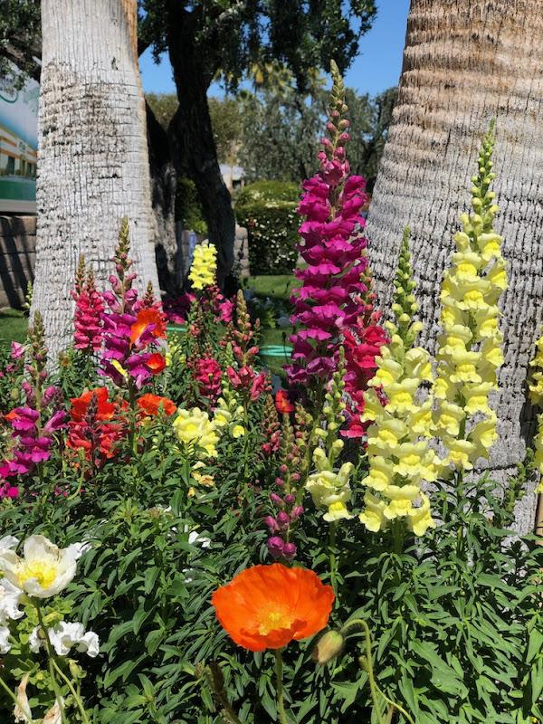 Palm Springs spring flowers