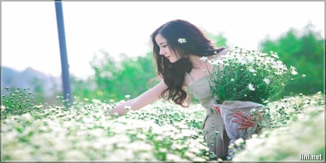 ảnh cô gái xinh đẹp và vườn hoa cúc họa mi