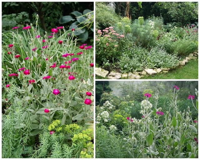 Kronen-Lichtnelke, Steppenwolfsmilch und weiße Spornblume