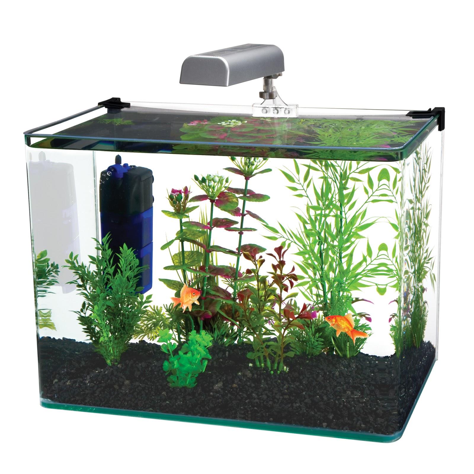 Một bể thủy sinh có sử dụng lọc góc