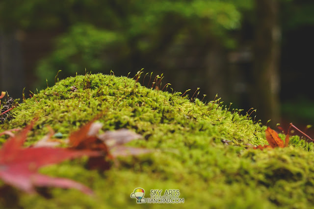 Tiny mosses
