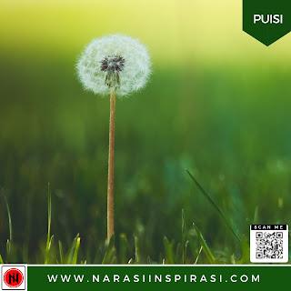 Puisi Alam: Dandelion dan Rumput