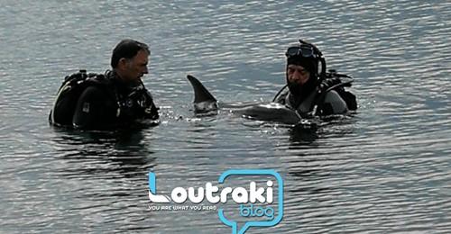 Τραγικές εικόνες με νεκρό δελφινάκι στο Λουτράκι - Πως εξέπεμπαν σήμα κινδύνου τα υπόλοιπα δελφίνια (βίντεο)