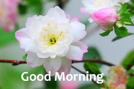 Latest Best Good Morning.