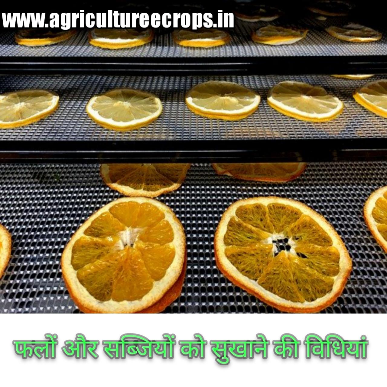 फलों और सब्जियों को सुखाने की विधियां Dehydration of fruits and vegetables