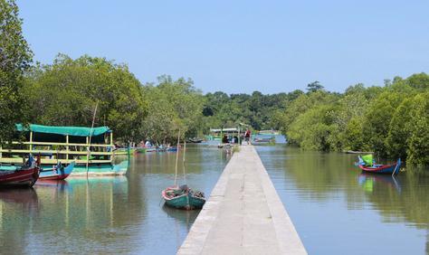 Tempat wisata mangrove banyuwangi