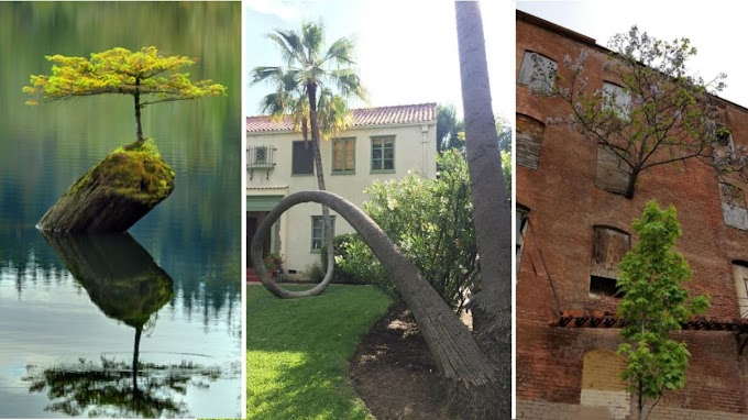 20+ Trees That Grew Up In The Most Impossible Landscapes Proving That Life Always Finds A Way