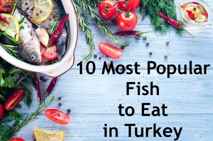 Best Fish To Eat in Turkey