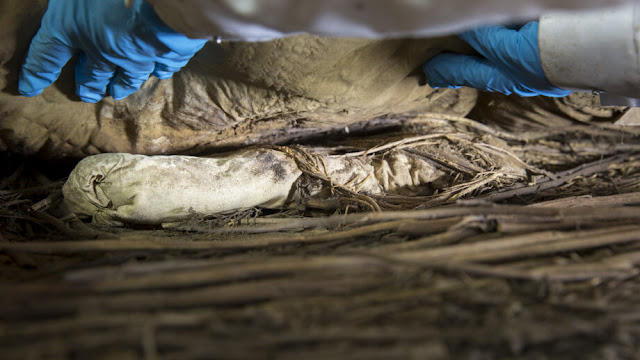 Foetus in bishop's coffin was probably his grandson