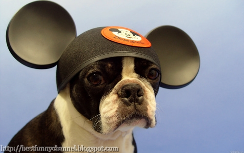 Dog fan of Mickey Mouse