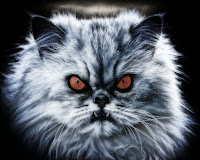 The 'Scope: Can Your Cat Cause Demonic Possession?
