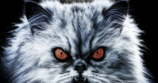 Can Your Cat Cause Demonic Possession?