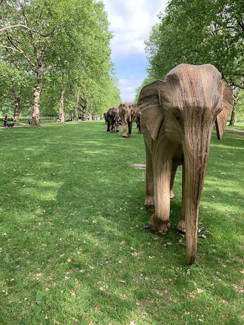 Line of elephants green park