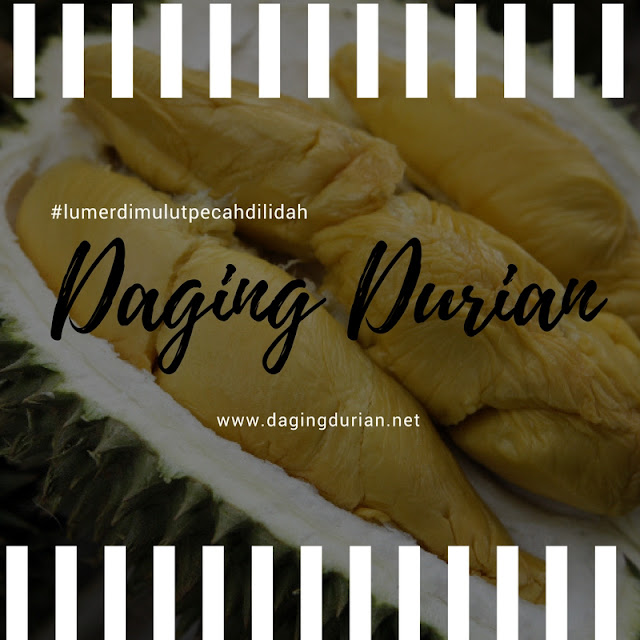 beli-disini-daging-durian-medan-bermutu-di-muara-beliti-baru